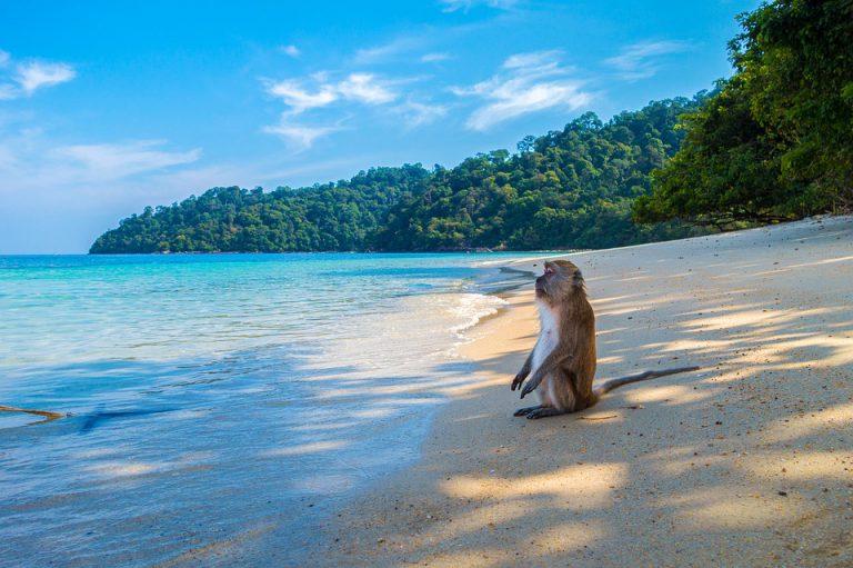 Kiedy jechać do Tajlandii na wakacje?